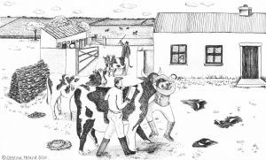 'The Sculling of the Cattle' Mary's story
